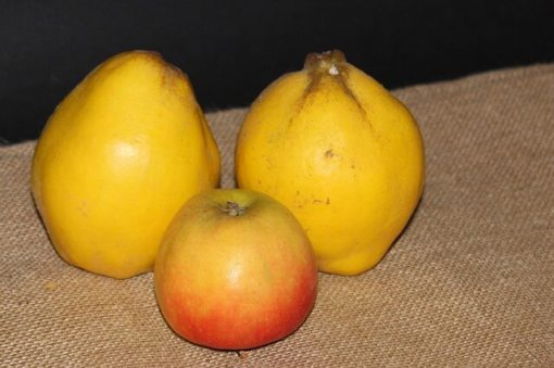 pomme-poire-coing